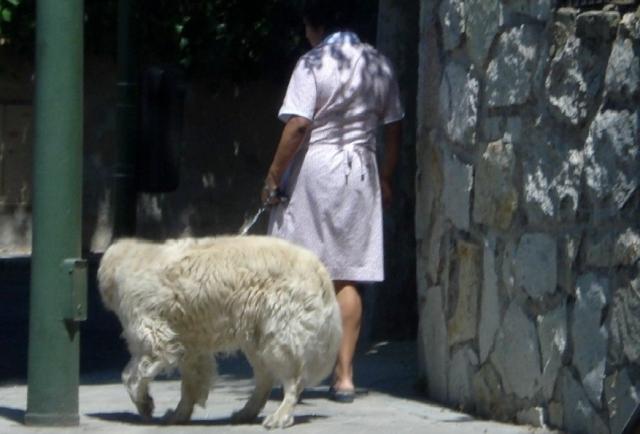 sluzaca-wyprowadza-psa
